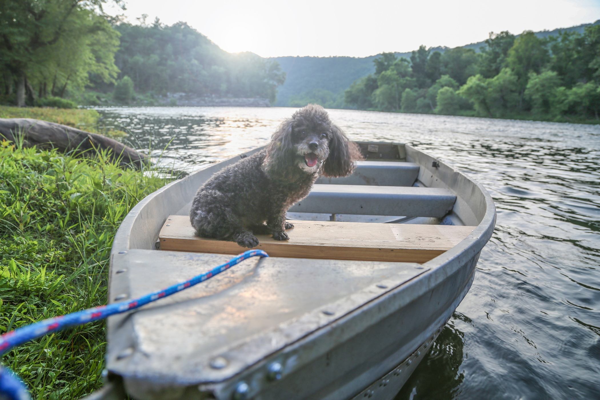 Dog_Friendly_Adventures_water_dog