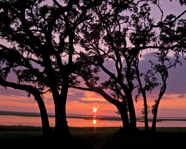 Sun setting between two trees over the salt marsh of Cumberland Island National Sea Shore.