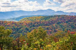 Survival Guide: 10 Essential Skills for the  Blue Ridge Backcountry
