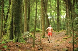 Will Harlan runs through Great Smoky Mountains National Park in pursuit of a trail running record.