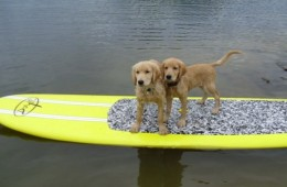 Puppies on Stonewall Jackson Lake