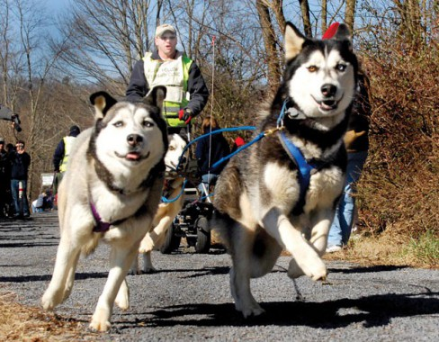 Dog sledding in the South