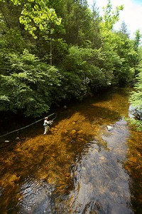 fishing in Monongahela National Forest on Elk River