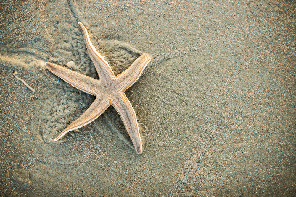 Found this little guy. First time ever seeing a starfish in real life.