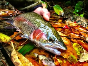 east-fork-farm-trout