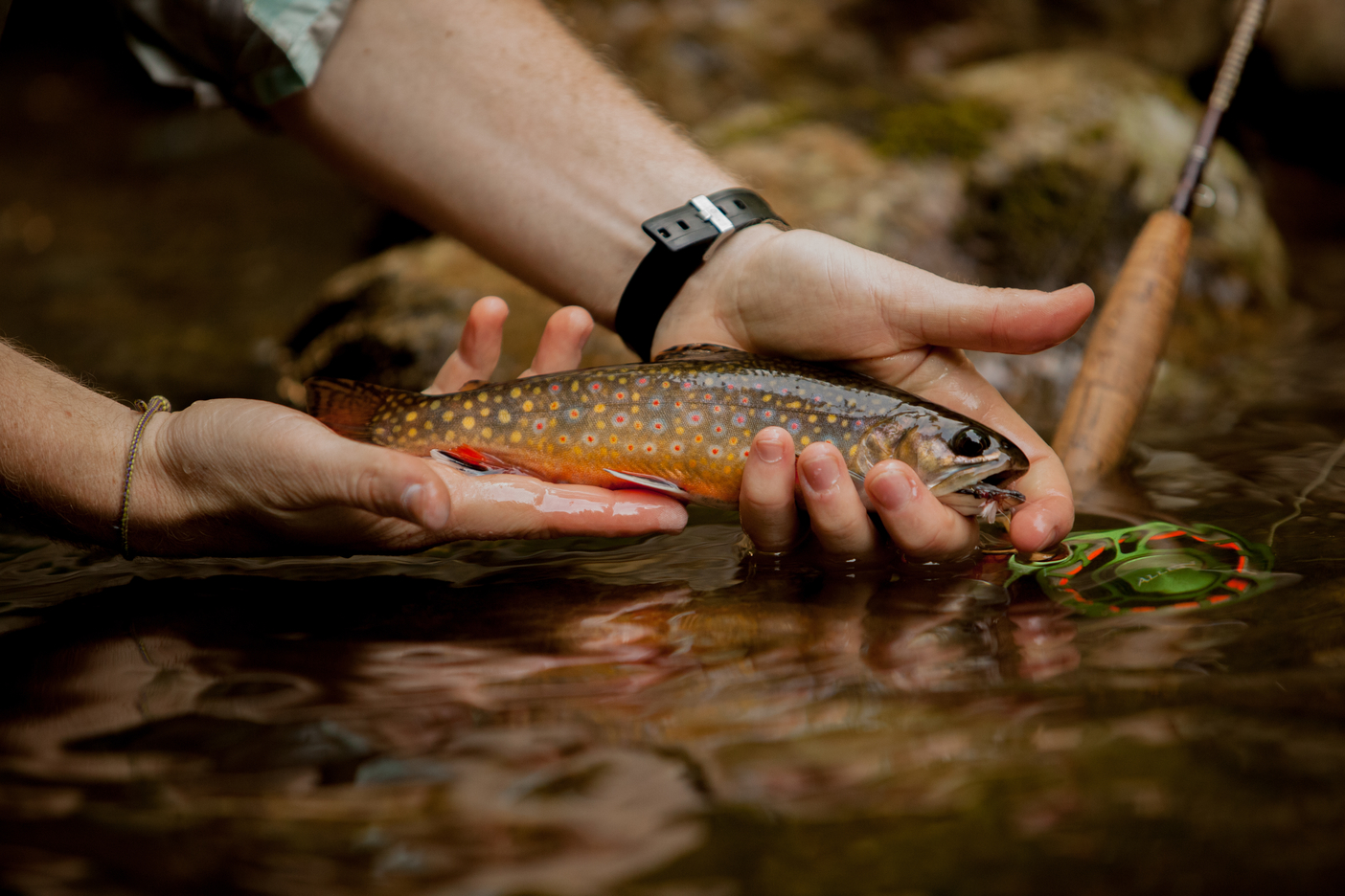 Fly Fishing Rapidan River, Shenandoah National ParkHCV Next