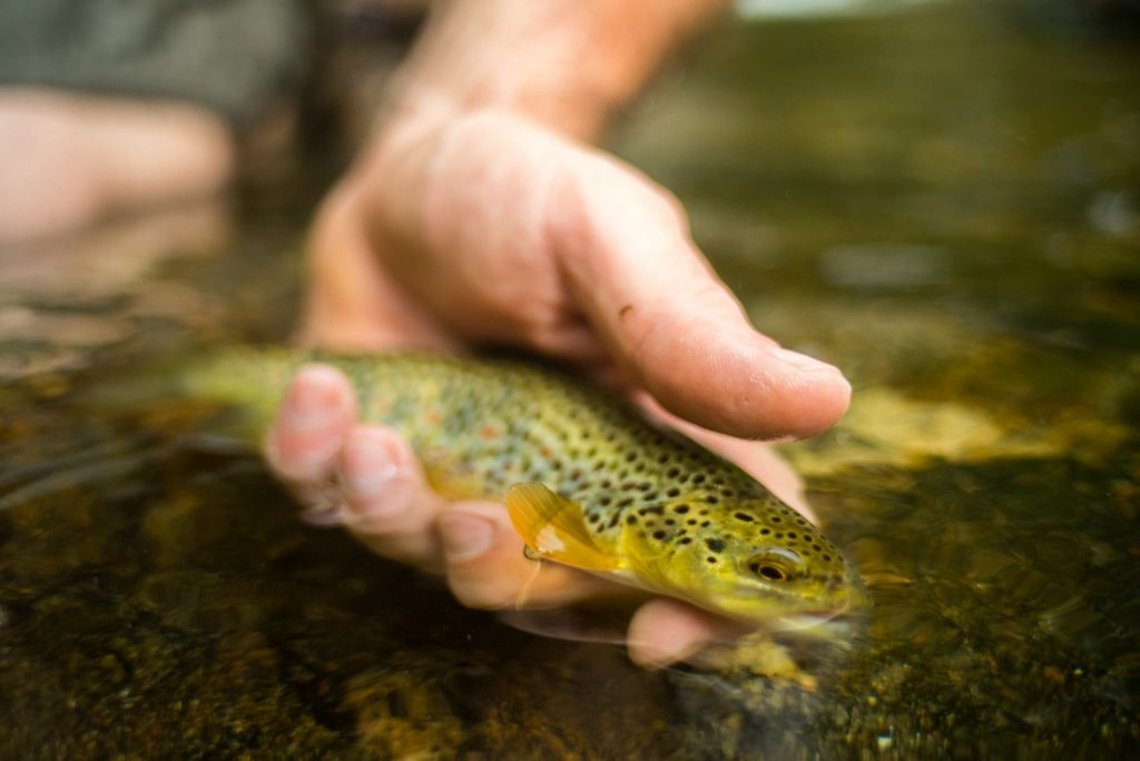 fridays on the fly 4 must fish west virginia trout streams