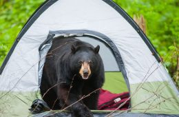 Camping Safety: How to Avoid Wild Animal Encounters