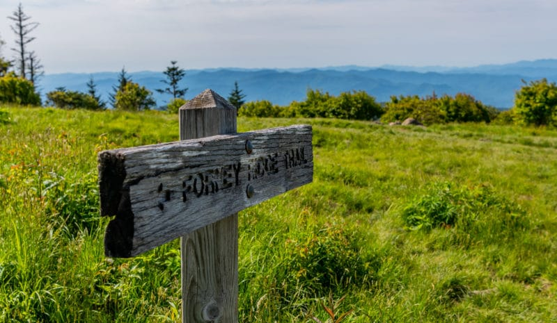 Andrews Bald Sign in Great Smoky Mountains National Park
