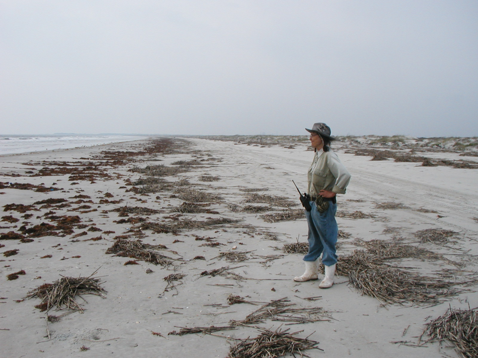 Beach Reading: Carol Ruckdeschel's New Book Is the Defining Natural History of Cumberland Island