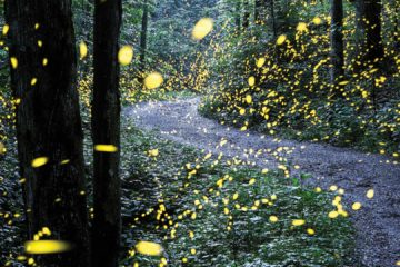 Fireflies In The Mountains
