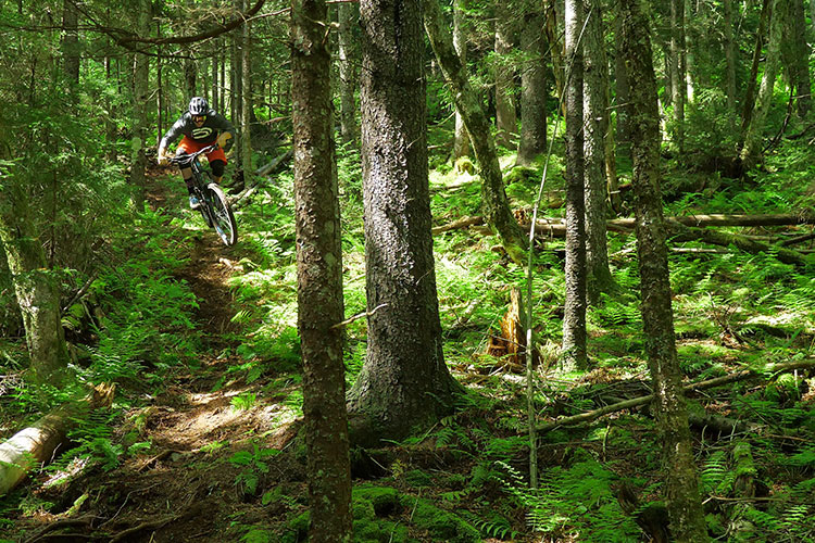 Lovely, Dark, and Deep: Riding Snowshoe's Deepest and Darkest Trails