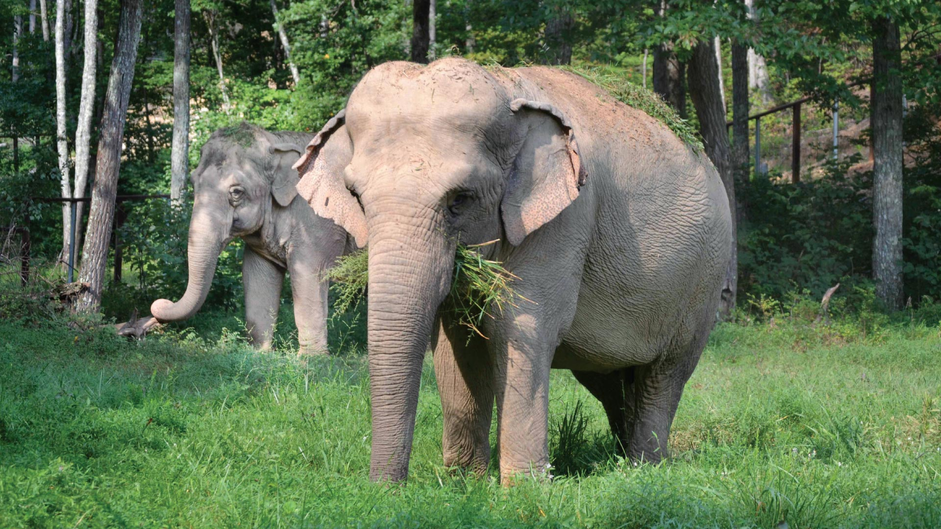The Elephants of Middle Tennessee
