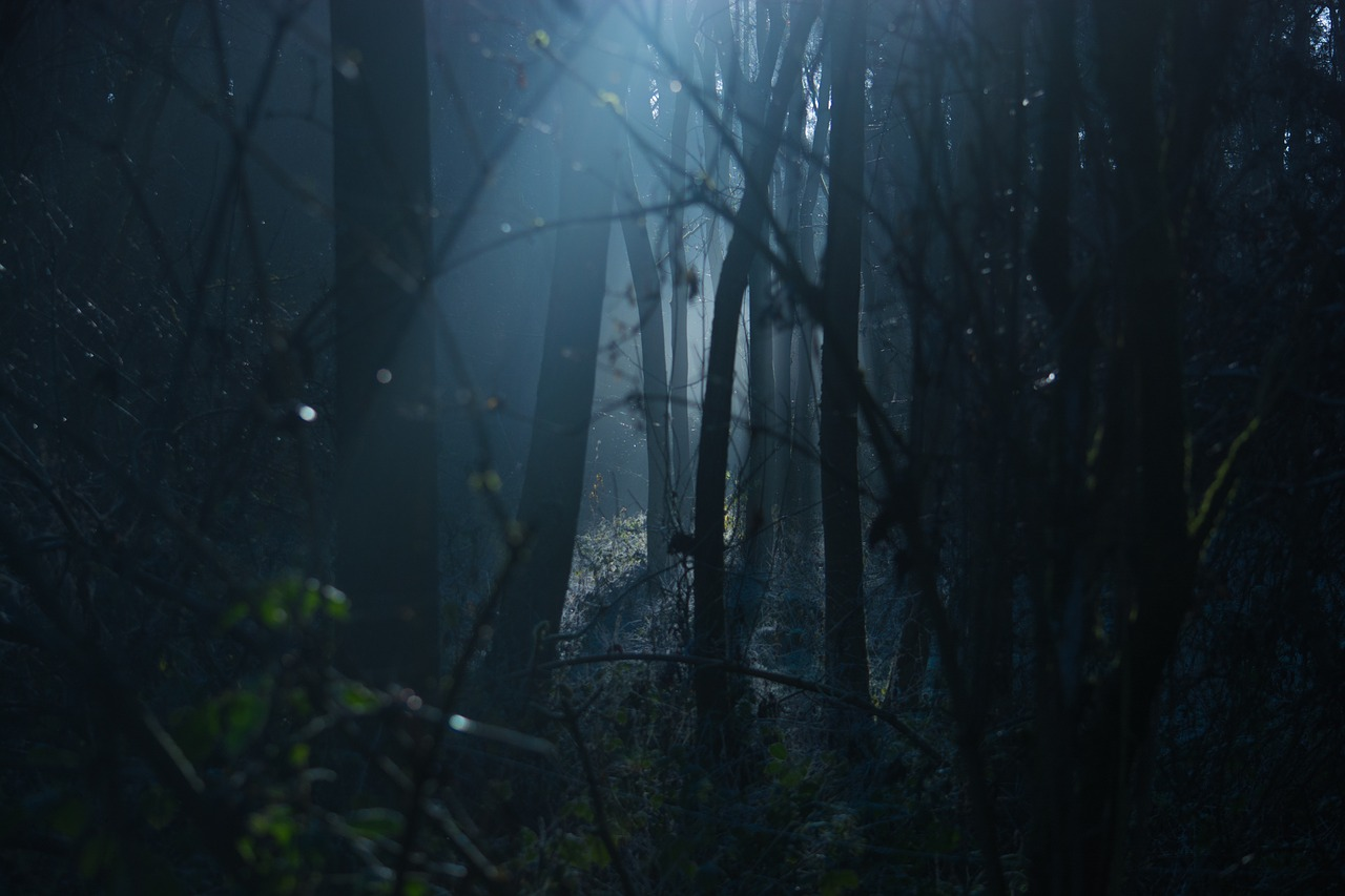 Natural Woods Dark Moody Spooky Forrest Scary