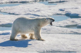 Quick Hits: Polar Bears invade Russian Town