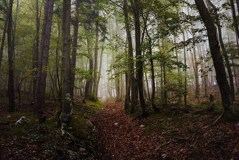 800px-Mystic_forest_on_a_foggy_day_in_autumn_in_Ajdna