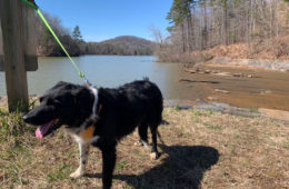 Trail Dog: Trail Review on Hanging Rock State Park, Danbury NC