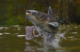 Outdoor Updates: NC species are being considered for the Endangered Species Act