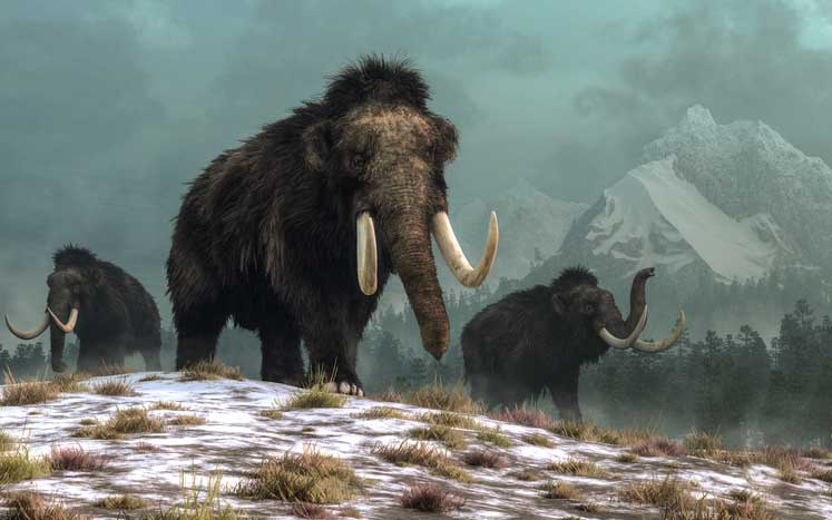 Outdoor Updates: Governments consider adding extinct wooly mammoth to endangered species list to slow ivory smuggling