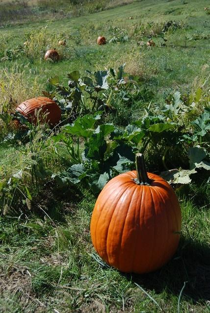Fall Farm Days: Rest and Rejuvenation Weekend
