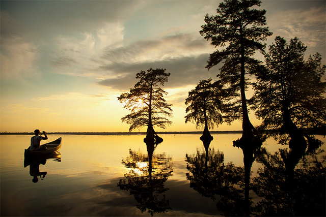 FEATURE IMAGE_dismal swamp