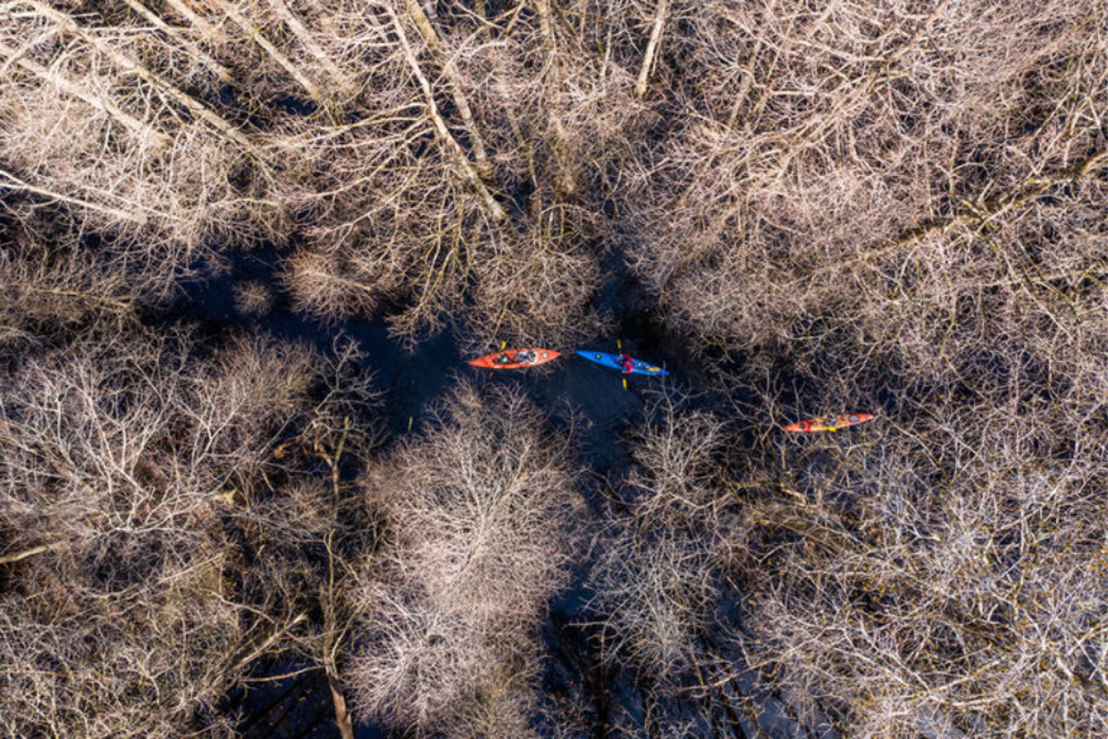 Kayak Into The Woods (1)