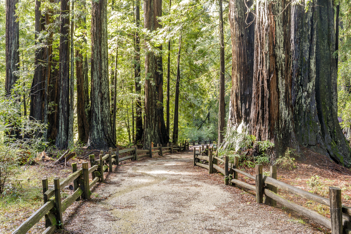Big Basin Redwoods State Park, Santa Cruz County, California, USA.
