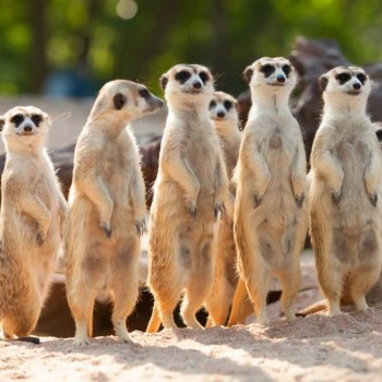 Need some comic relief this Valentine's Day? A zoo will name a cockroach after your ex and feed it to a meerkat.