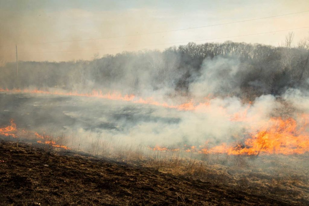 Prescribed burns planned on the Pisgah Ranger District