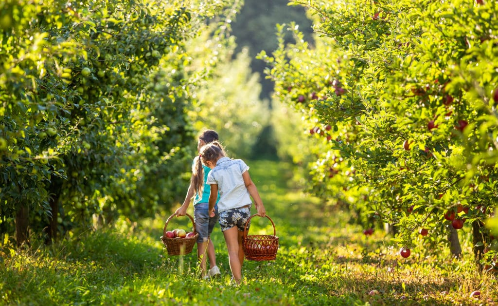 Pick your own apples in the Blue Ridge