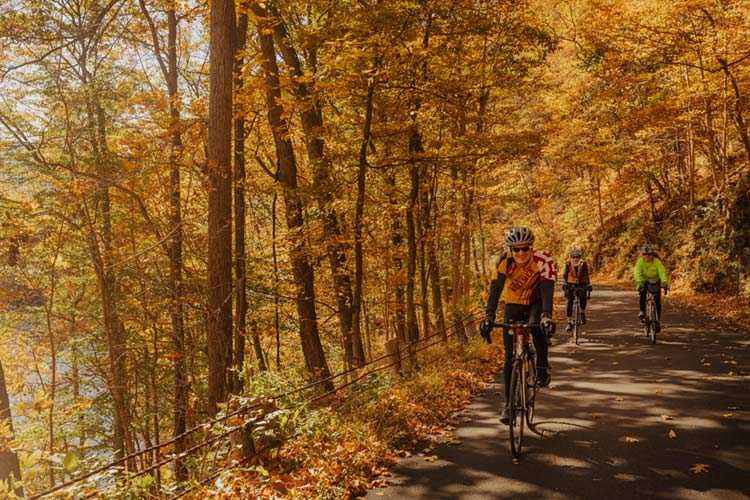 Road Cycling in Fall in Allegany County